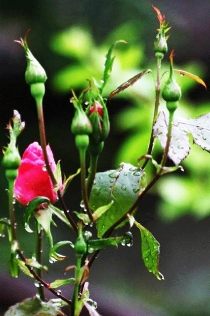Yağmurlarla Gelen Güzellikler galerisi resim 1