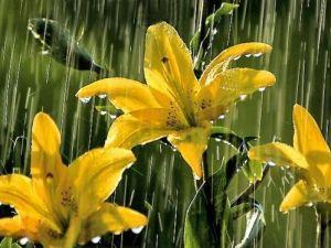 Yağmurlarla Gelen Güzellikler