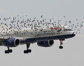 Uçakların En Büyük Tehlikesi galerisi resim 1