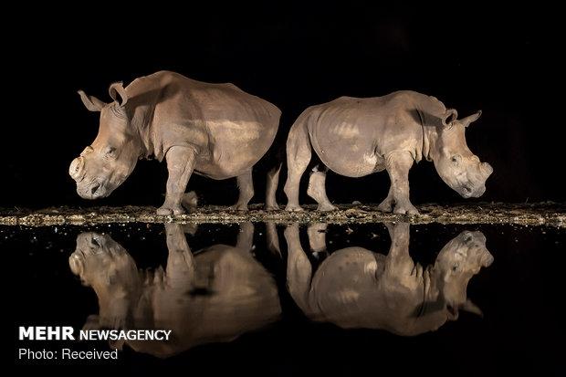 2018 National Geographic Fotoğraf Yarışması Sonuçlandı galerisi resim 8