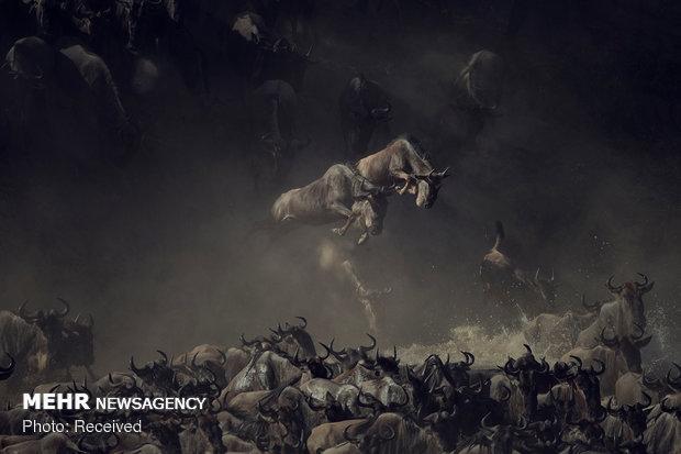 2018 National Geographic Fotoğraf Yarışması Sonuçlandı galerisi resim 9