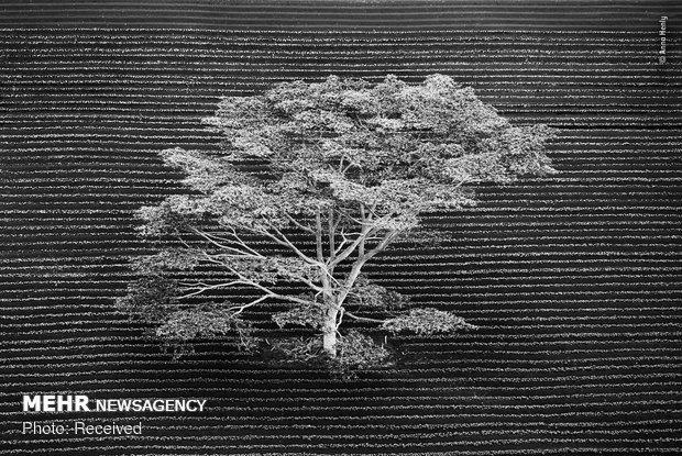 Vahşi Doğa Fotoğraf Yarışması galerisi resim 1