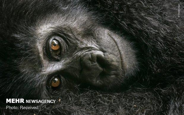 Vahşi Doğa Fotoğraf Yarışması galerisi resim 15