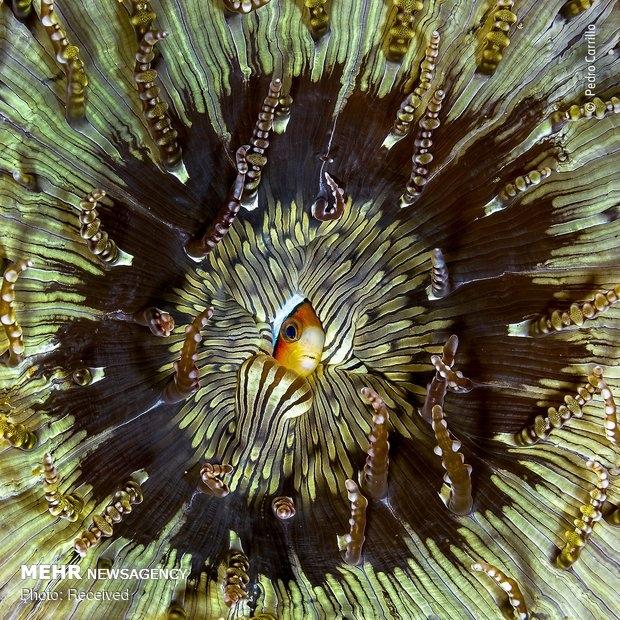 Vahşi Doğa Fotoğraf Yarışması galerisi resim 16