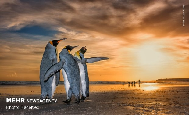 Vahşi Doğa Fotoğraf Yarışması galerisi resim 18