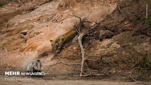 Vahşi Doğa Fotoğraf Yarışması galerisi resim 19
