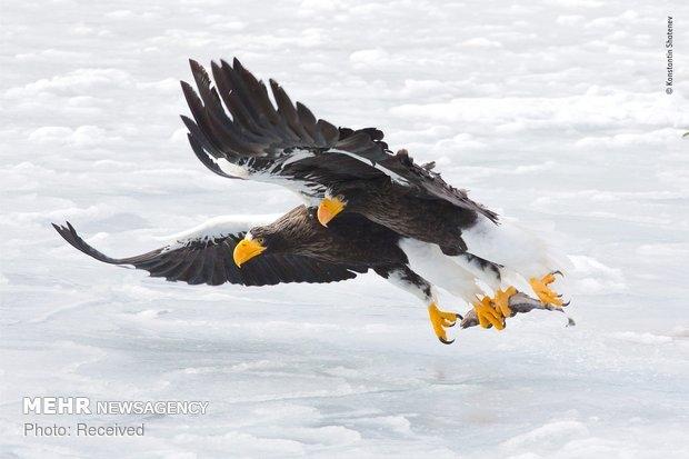Vahşi Doğa Fotoğraf Yarışması galerisi resim 22