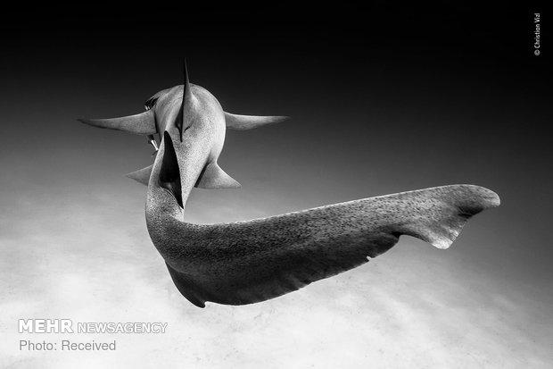 Vahşi Doğa Fotoğraf Yarışması galerisi resim 23