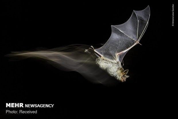 Vahşi Doğa Fotoğraf Yarışması galerisi resim 24