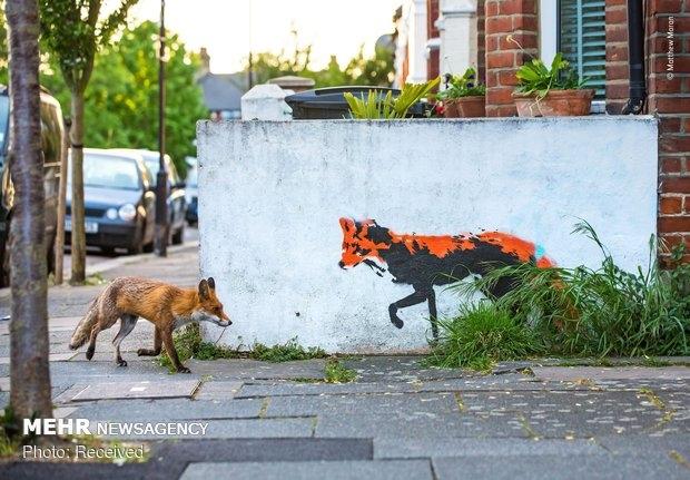 Vahşi Doğa Fotoğraf Yarışması galerisi resim 5