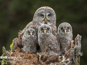 Vahşi Doğa Fotoğraf Yarışması