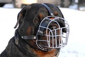 Türkiye'de 50 bin kadar tehlikeli köpek var