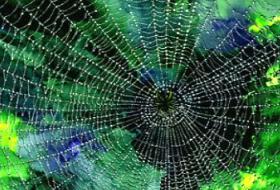 Örümcek ağının şifresi çözüldü