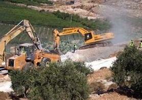 Portakal'dan CHP'li belediyeye ağaç tepkisi