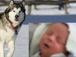 6 günlük bebeğin kafasını yedi