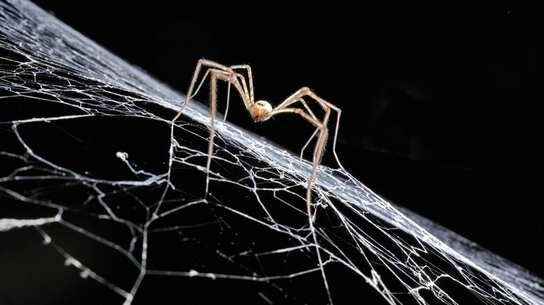 Örümcek ipliği kemikleri yapıştıracak