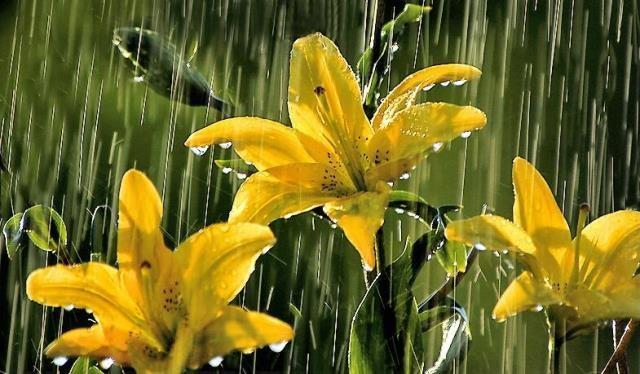 Yağmurlarla Gelen Güzellik GALERİ