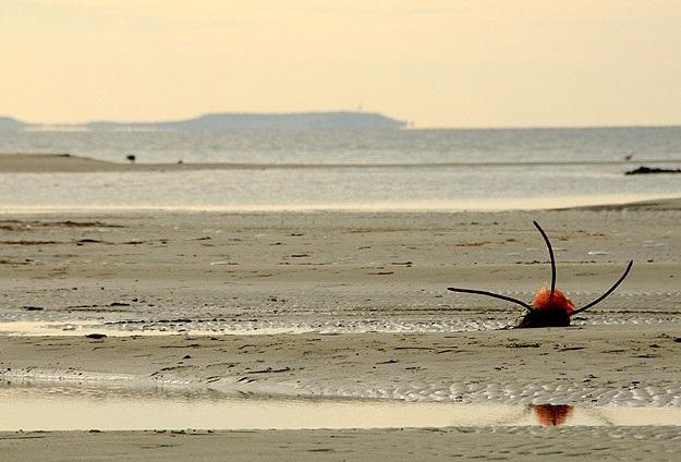 Çanakkale Boğazı'nda deniz suyu 20 metre çekildi