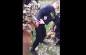 Filistinli Çocuğa Köpekle İşkence-VİDEO