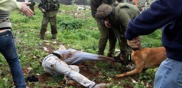 Kudurmuş KÖPEK'lerin İşkence Savunması !