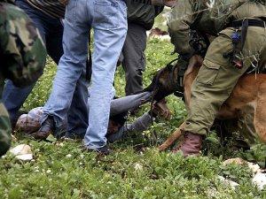 İsrail Köpekli İşkenceyi Geçici Olarak Durdurdu