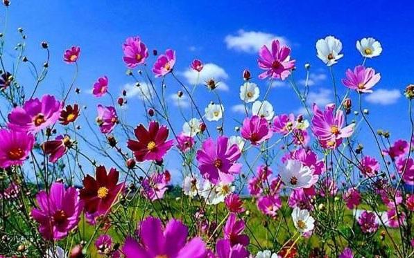 Kur'ân ve Bahar Mevsimi
