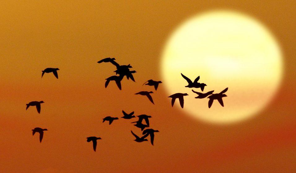 Rabbimizin Mucizesi  Göçmen Kuşlar