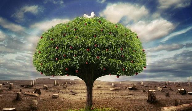 Siyonist Yerleşimciler, Ağaçları Yaktı