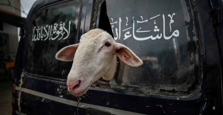 Gazze'de Kurban Bayramı Hazırlığı(FOTO)