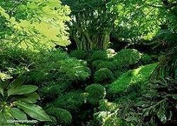 İstanbul'a iki dev orman müjdesi