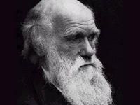 Karar Yazarı Evrim Teorisinin Müfredattan Çıkarılmasını Eleştirdi