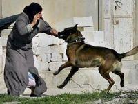İşgalci Siyonist Köpeklerle Saldırdı