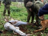İsrail'in İtleri Aksa'yı Bastı !