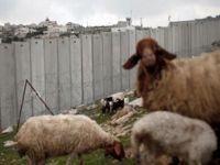 Siyonistler Koyunu Gözaltına Aldı