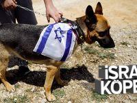 İsrail  Sözcü Kin Kustu