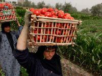 Körfez Ülkeleri 'Mısır'ın Tarım Ürünleri Yasağını' Kaldırdı