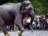 Müslümanları Fillerle Ezdiler