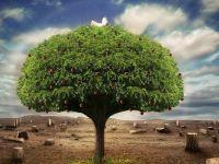 Siyonistler 1000 Zeytin Ağacını Yaktı