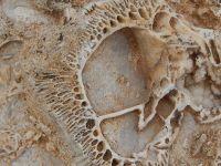 Konya Hadim'de Yürürken Fosil Yatağı Buldu