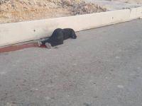 İşgalci Askerler Müslüman Kadını Vurdu